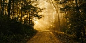 Sunlight, woods, dirt road